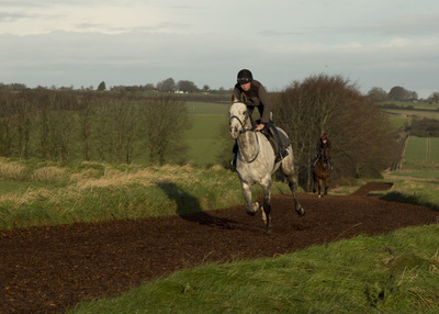 Whitsbury all weather gallops